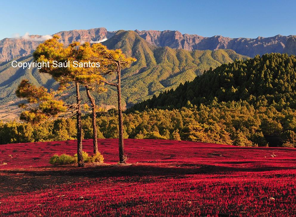 Impresionantes valores naturalesLos espectaculares paisajes de nuestra isla, animan a descubrir cada uno de sus rincones.